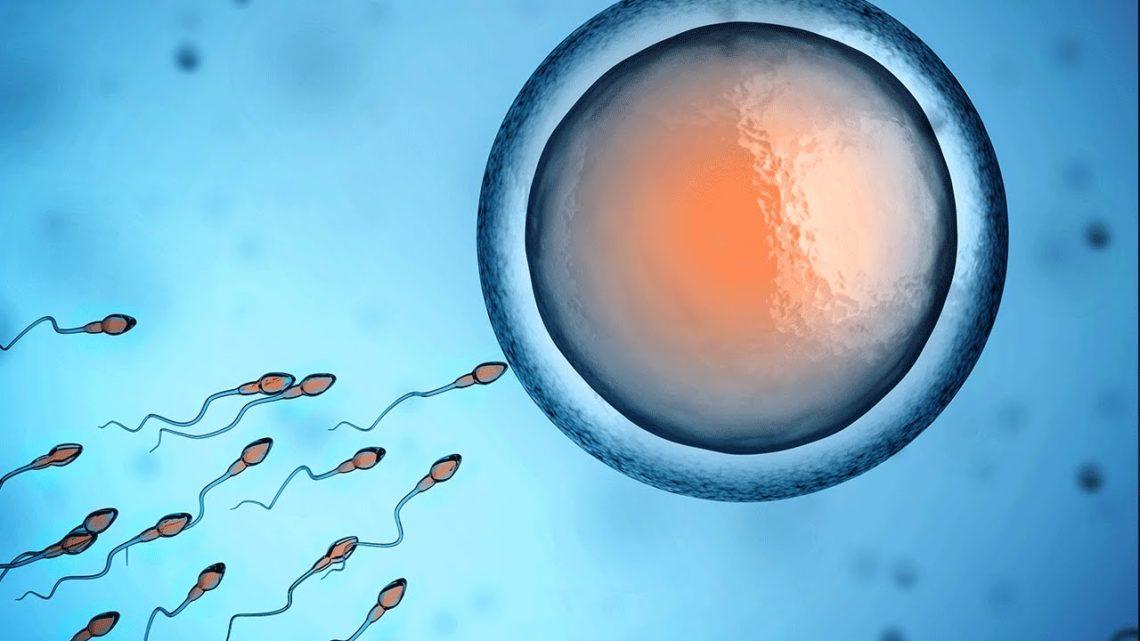 As evidências do início da vida na concepção vs. opiniões e subjetividades