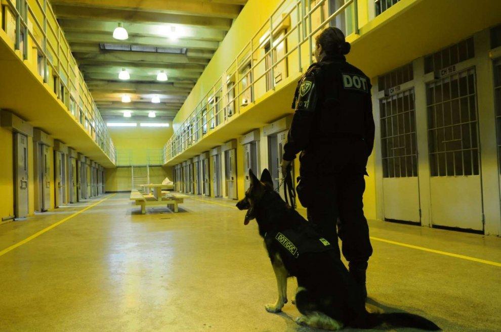 desencarceramento